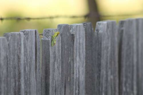 Grasshopper Fence Rural Insect Nature Green