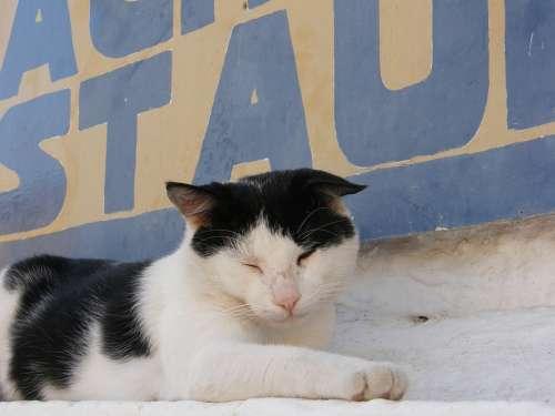 Greece Cat Mood Animal Pet Summer
