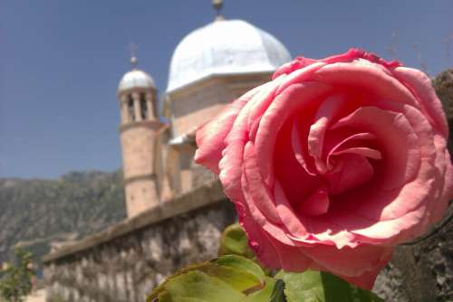Greece Church Rose Summer Hot Summer Flower