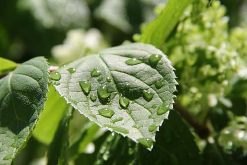 Green Leaf Rain Nature Plant Summer Natural