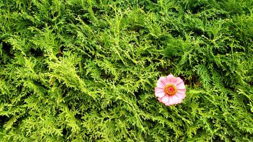 Green Pink Flower Texture Nature Floral Spring
