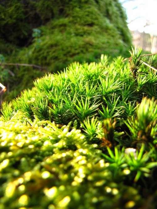 Green Forest Autumn Moss Macro