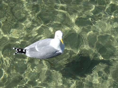 Gull Water Nature