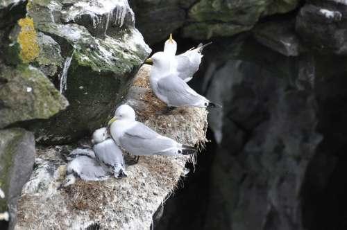Gulls Box Wall Birds Sitting Gull Sea Nest
