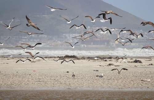 Gulls Beach Sea Flying Sand Beach Water