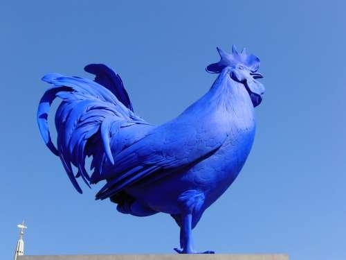 Hahn Blue Rooster British Figure Bird Art