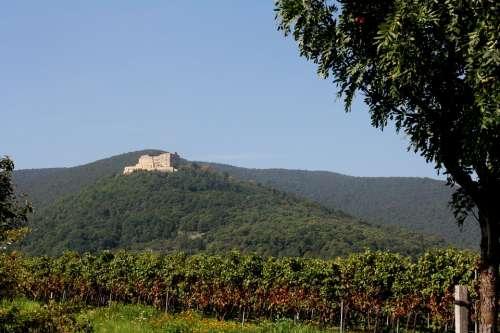 Hambach Castle Palatinate Wine Vintage New Wine