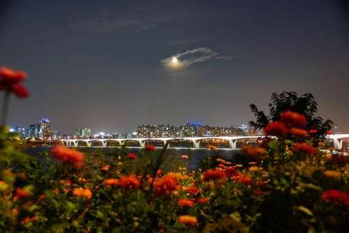 Han River Night View Autumn