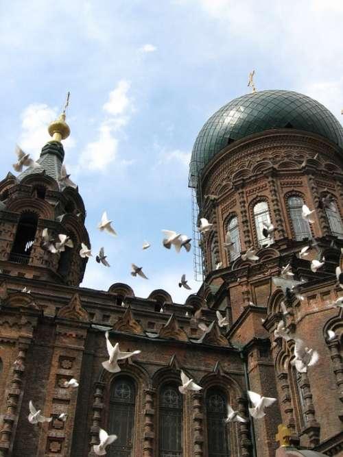 Harbin Sofia Church Building Pigeon