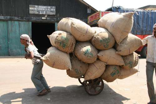 Hard Labour Sacks Transportation India Sack Barrow