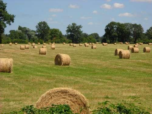 Harvest Haying Field