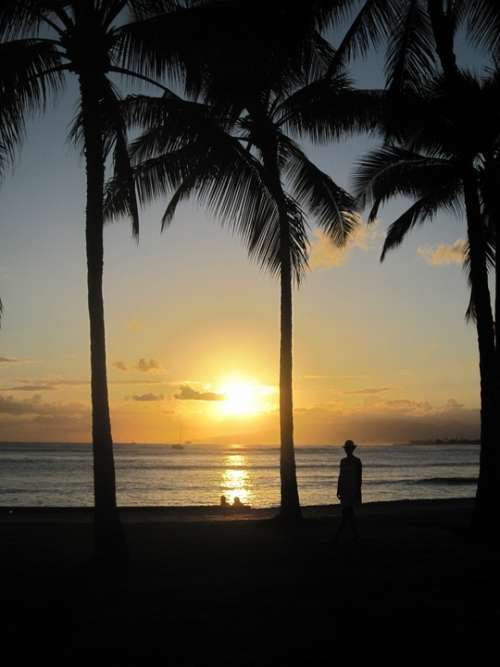 Hawaii Beach Sea Sonnenunergang Palm Trees