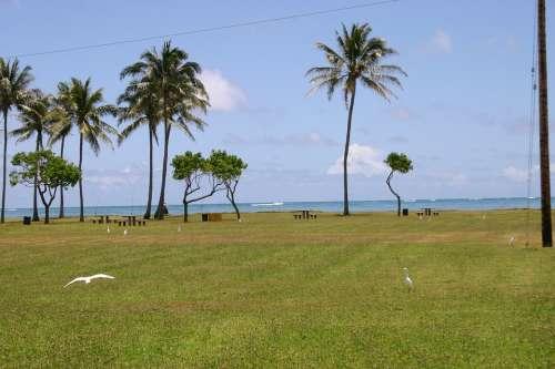 Hawaii Beach Palm Trees Sea Ocean