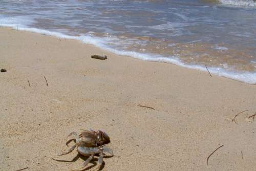 Hawaii Sea Crab Sand Ocean