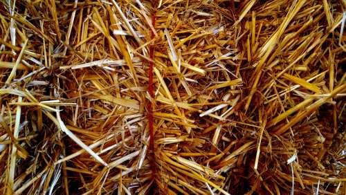Hay Harvest Texture Golden Farm Agriculture Field