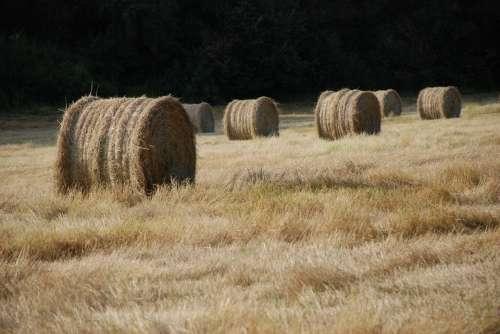 Haystack Bale Of Straw Fields Hay Straw Needle