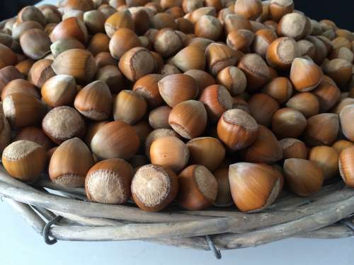 Hazelnuts Nuts Basket Food Eat Fruit Pod