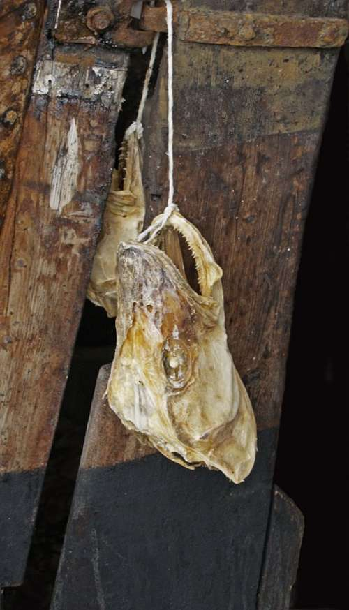 Head Fish Bone Skull Carcass Hanging Macro