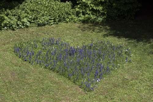 Heart Wild Sage Love Meadow Mowed Grass Green