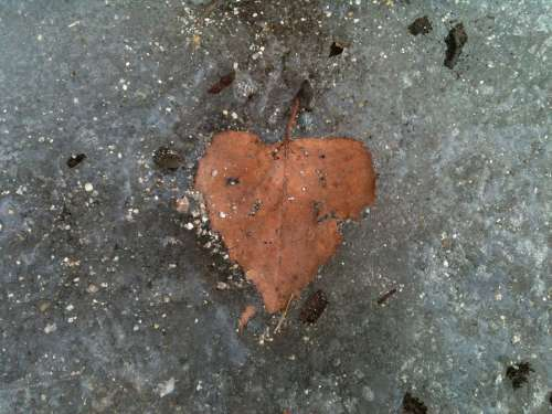 Heart Leaf Frozen Cold Heart Relationship Ice Icy