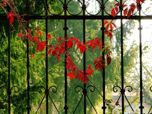 Heart Love Red Fall Autumn Symbol Color Floral