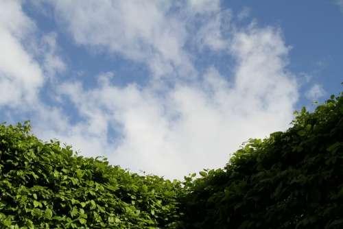 Hedge Sky Gardening Landscape Shrubs Green Plant