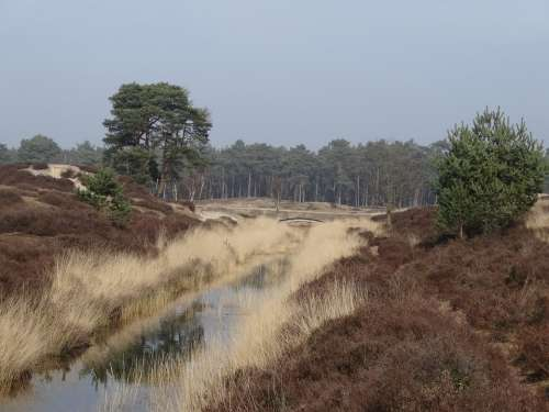 Heide Nature Green Trees Color English Landscape