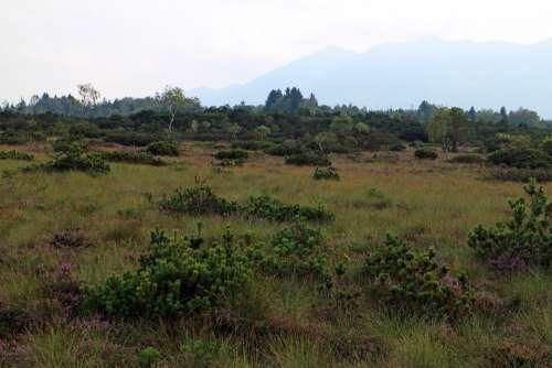 Heide Moor Landscape Nature Hiking Nature Reserve