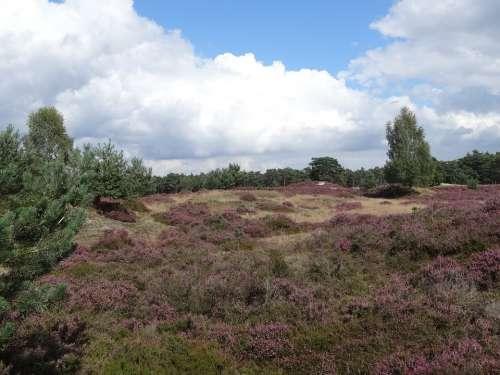 Heide Landscape Nature