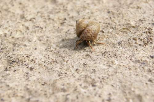 Hermit Crab Shell Snail Sea Nature Animals Water