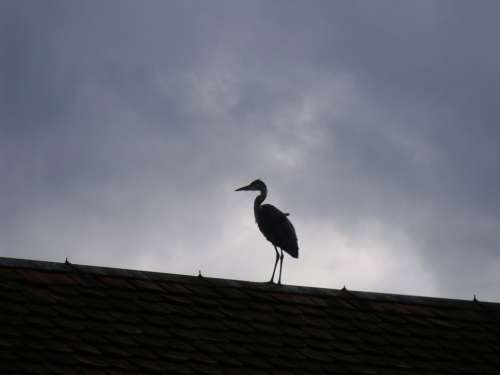 Heron Bird Roof Dark Clouds
