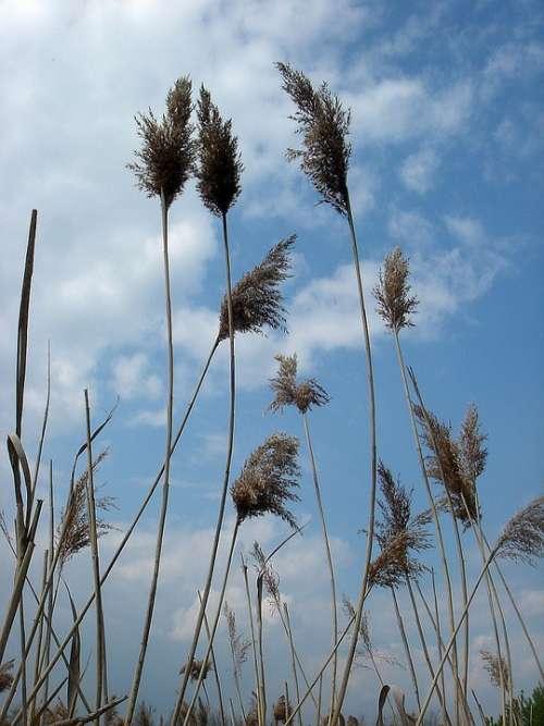 High Dry Grass Sky Wind Movement