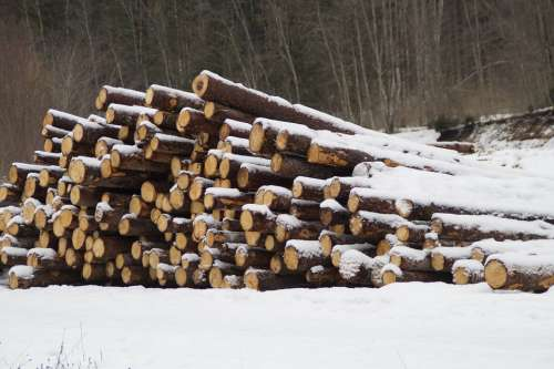 Holzstapel Tree Trunks Strains Log Stacked Up