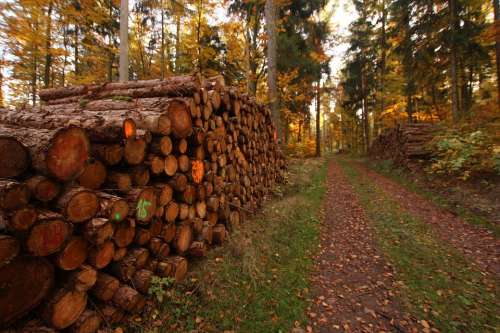 Holzstapel Like Trees Timber Industry Forest