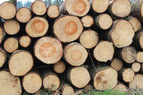 Holzstapel Like Annual Rings Wood Sawed Off Grain