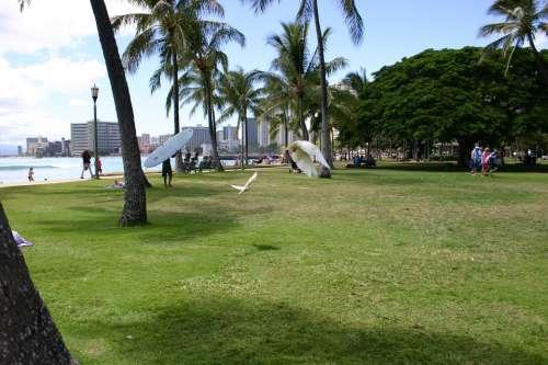 Honolulu Beach Hawaii Park Gull Vacations