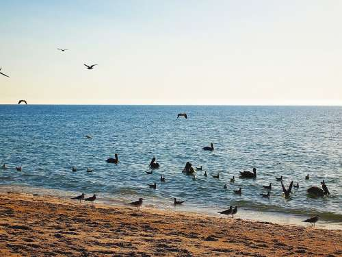 Horizon Birds Ocean Landscape Blue Nature Summer