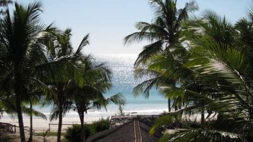 Horizon Coconut Trees Mar Ocean Blue Sky