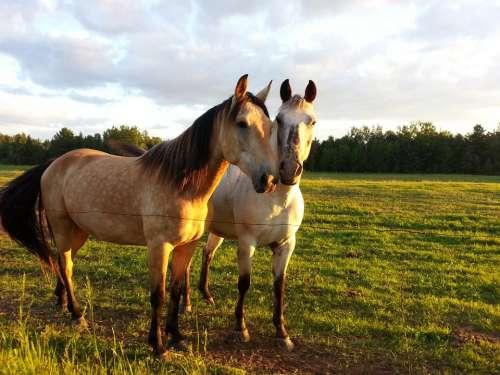 Horse Horseback Riding Animal Friendship