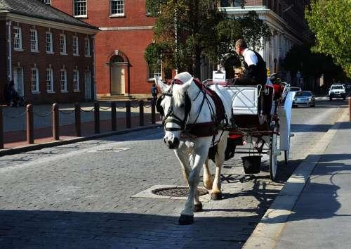 Horse Philadelphia Animal Street History