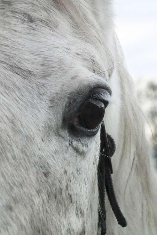 Horse Eye Mold