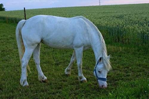 Horse Mold Grazing Evening Light Pasture