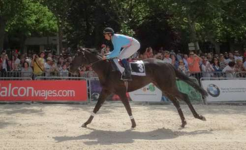 Horse Pure Blood Mare Brown Career Racecourse