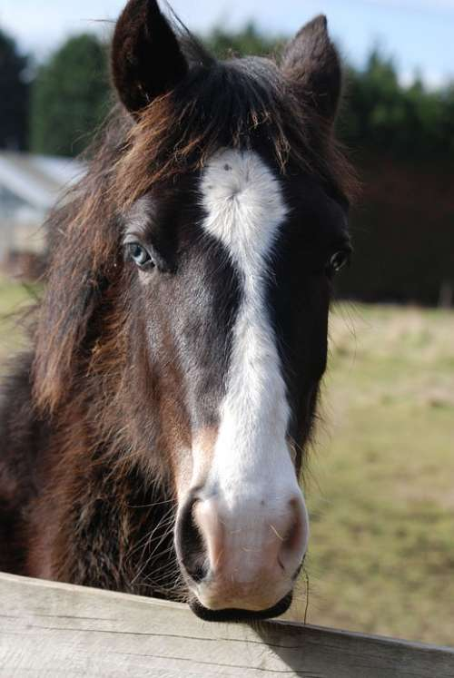 Horse Horse Head Pony Grazing