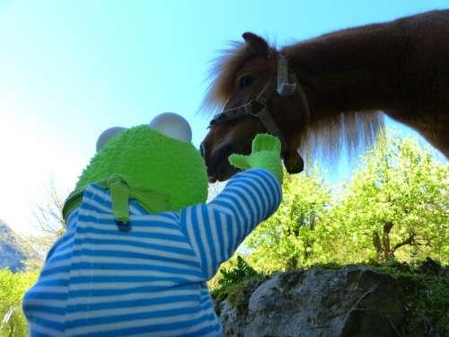 Horse Pony Animal Wuschelig Mane Fur Nice Sweet