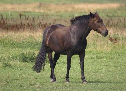 Horse Meadow Nature Animal Grass Pasture Mammal