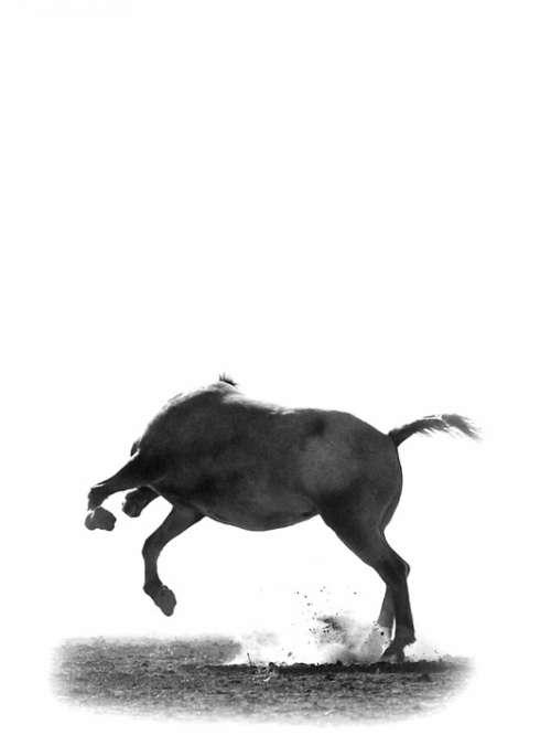 Horse Jump Wild Equine Animal Nature Equestrian