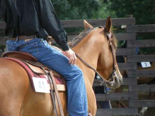 Horse Rider Races Portrait Western Competition