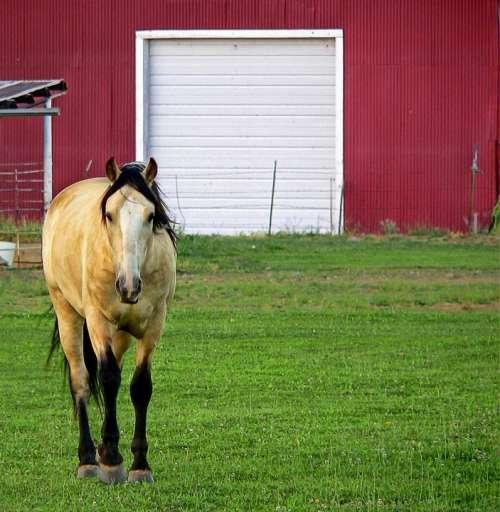 Horse Barn Pasture Farm Ranch Animal Country