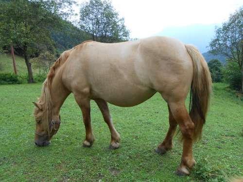 Horse Pasture Mountain